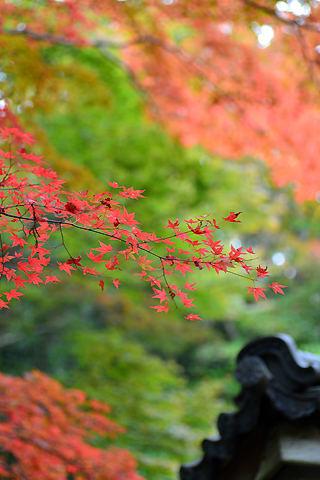 有馬温泉瑞宝寺公園の紅葉 2013年11月6日