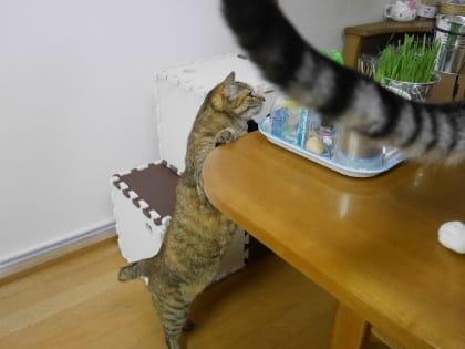 フタリのバースデーケーキ【動画】