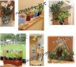 空気浄化のできる園芸培土ネオコール