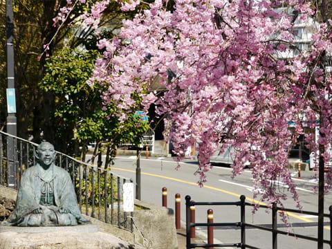 ゆけむり広場の桜