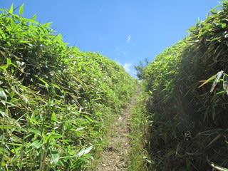 http://blogimg.goo.ne.jp/user_image/4a/af/f49c0c711e82c2212756357da75baa71.jpg