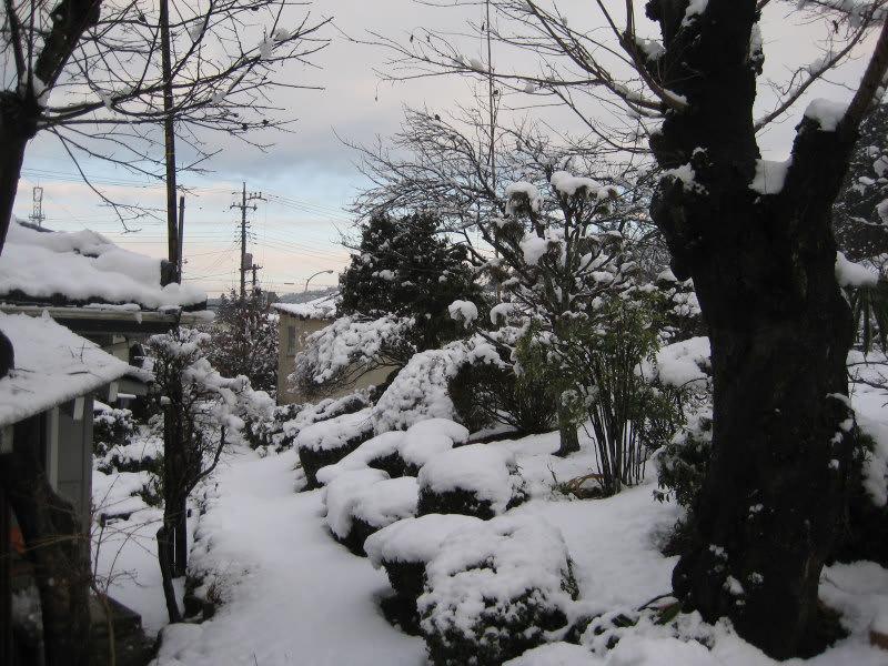 Yuki15feb2011