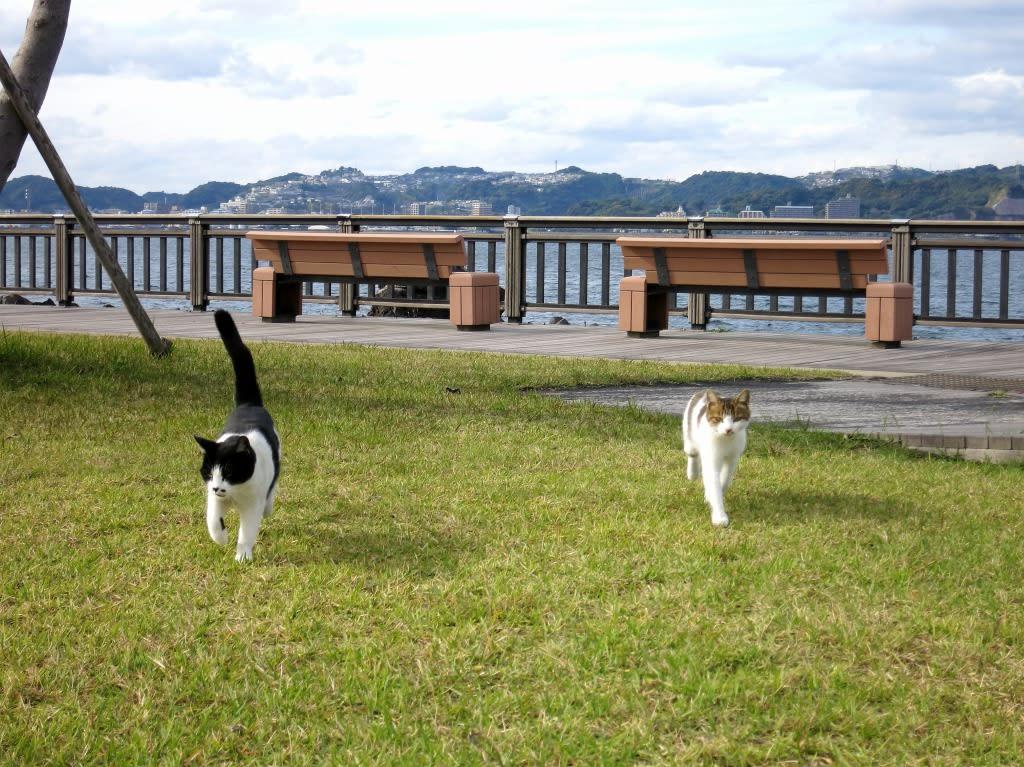 猫とPCケース 55台目 [無断転載禁止]©2ch.netYouTube動画>6本 ->画像>372枚
