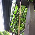 2011-6-4-23 ツル性植物