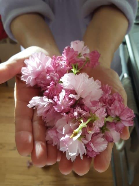 お部屋でお花見