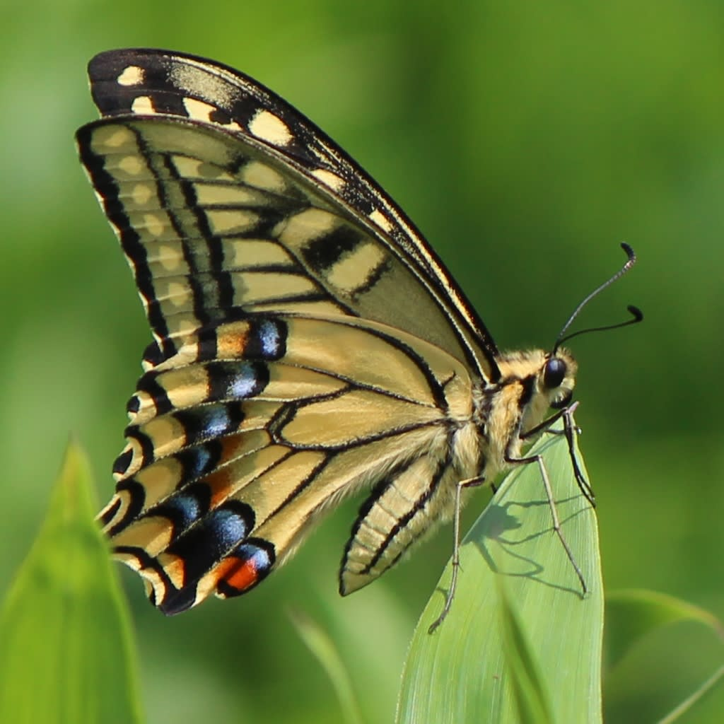 庭の虫(幼虫)と花 - 湯原修一の歓喜悦慶,聊かの慷慨憂愁, etc.