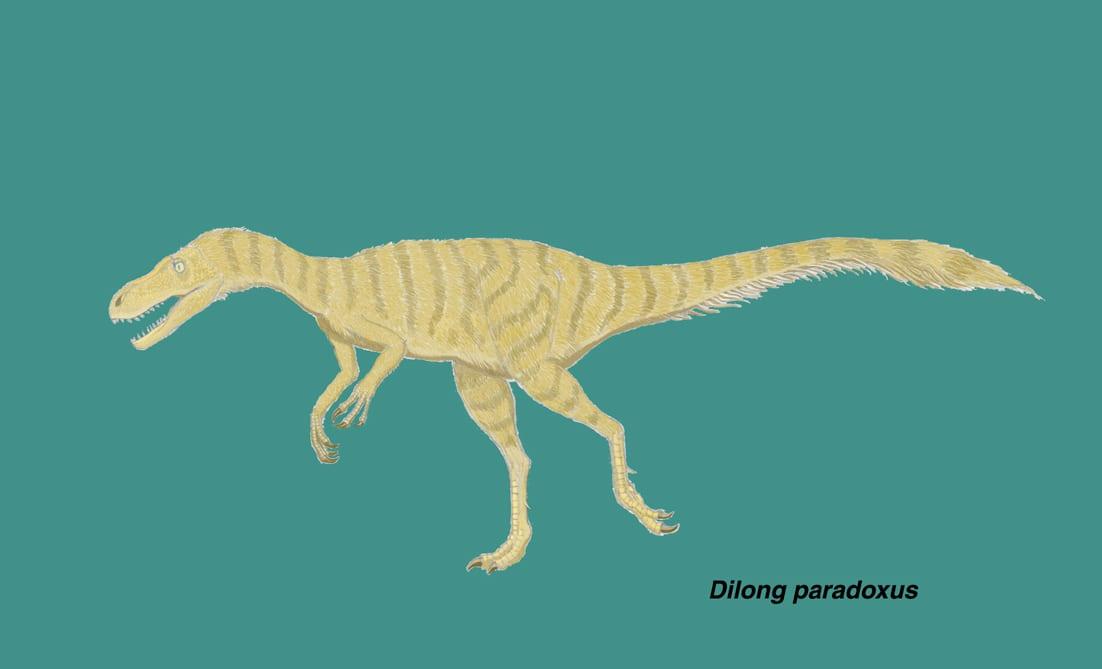 ディロングは白亜紀前期に中国遼寧省に生息した小型で基盤的なティラノサウ... ティラノサウルス上