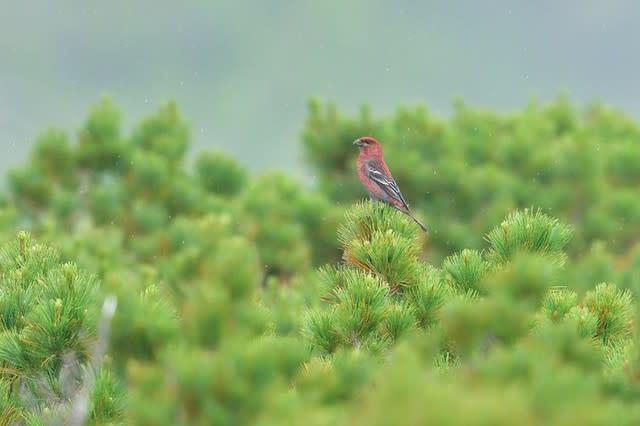 喜&寿の野鳥観察