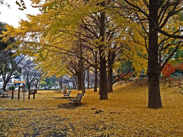 Image result for 芝公園 銀杏