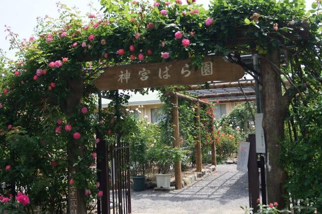 神宮ばら園「春のばら展」見てきました〜��1〜2016年