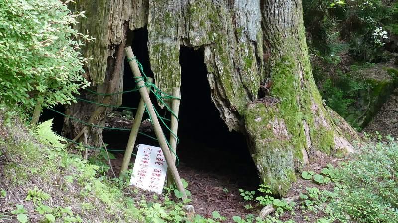 矢立の杉の根元は空洞になっている
