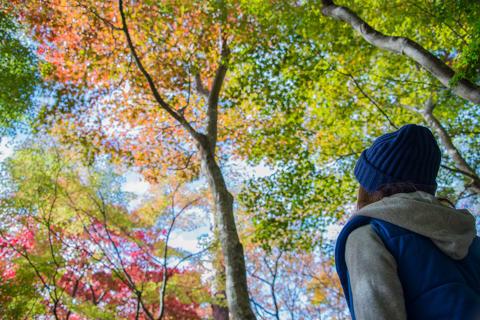 有馬温泉瑞宝寺公園の紅葉 2014年11月5日