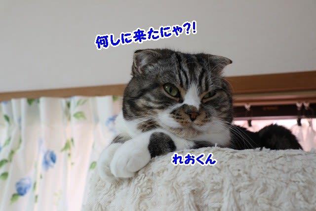 病気の猫ちゃん達を応援します☆