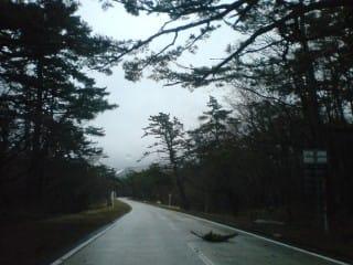 ガタガター。落ちた枝を避けながらの蛇行運転が必要。ちなみにこの写真は車を止めて撮っています。