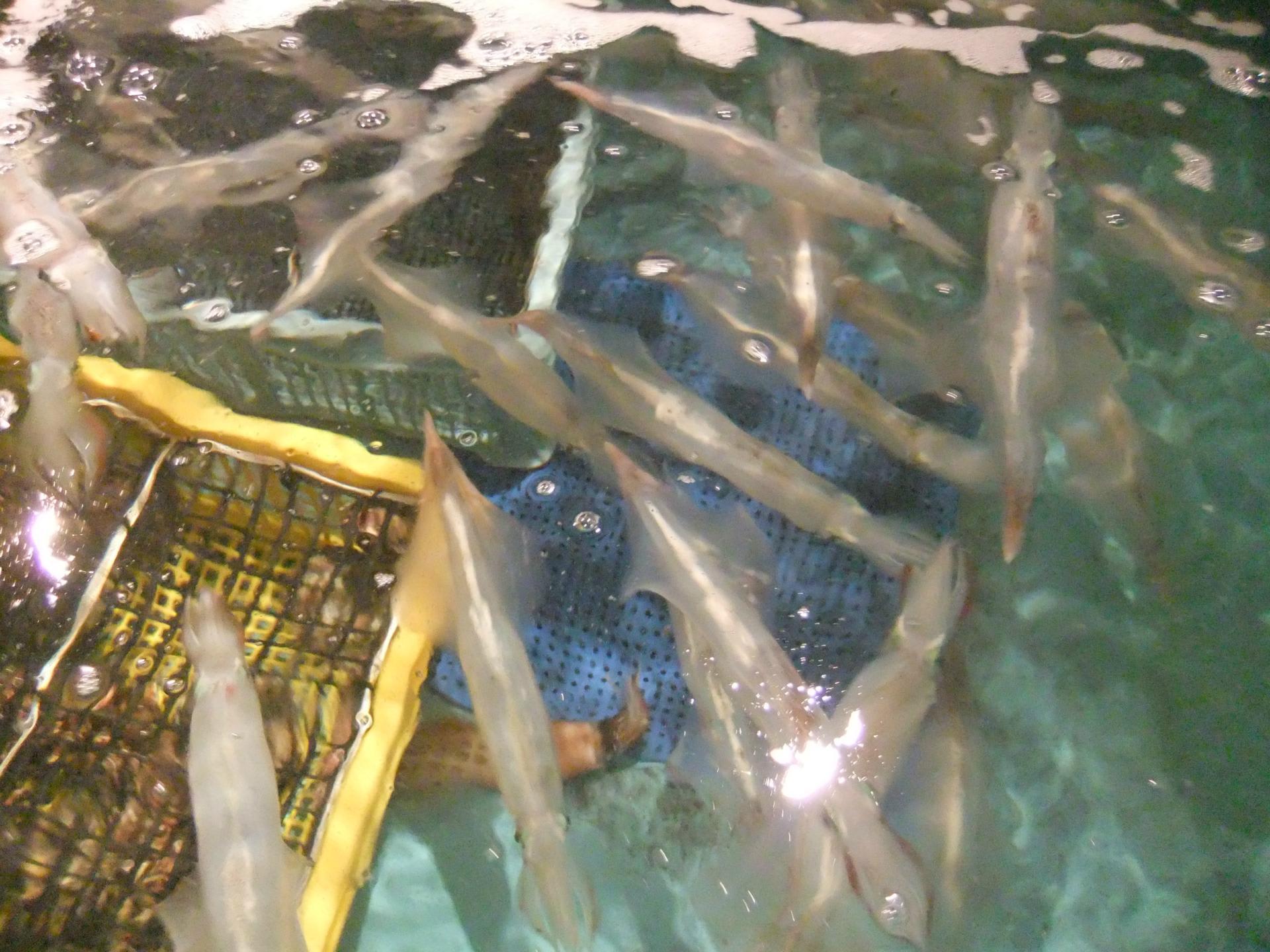 バンコク釣りメモ★筏や船で釣った魚を料理してくれるお店リスト | ぼち子のバンコク生活メモ
