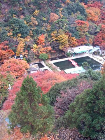 ます池周辺の紅葉