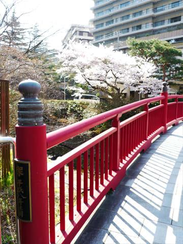 ねね橋の桜