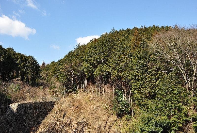 ダムの右手が石川古城古墳群のある森