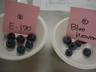 Blueheaven(ブルーヘブン)とE-170