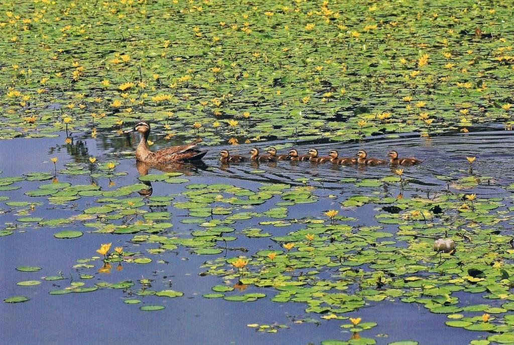 秋本さんの「見沼を観光地にしな 10月20日 私の好きな見沼 ...