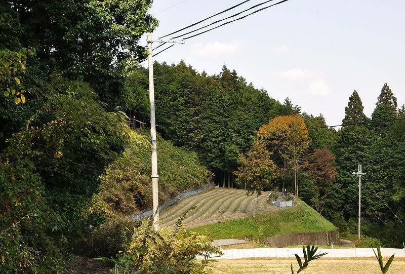 寺口忍海A-5号墳の森