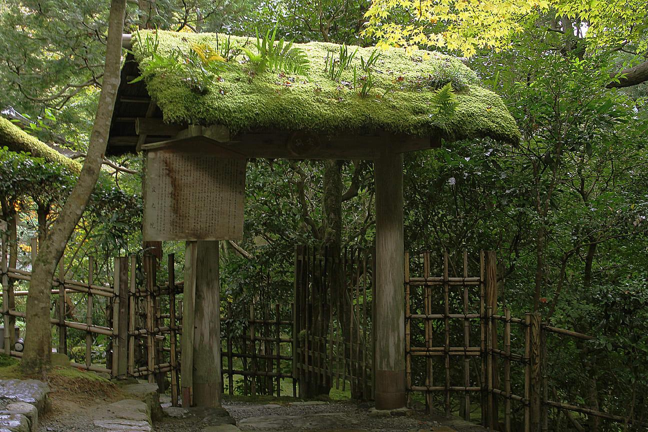 祇園精舎の鐘の声、諸行無常の響きあり。 沙羅双樹の花の色、盛者必衰のこ... 寂光院の紅葉見頃は