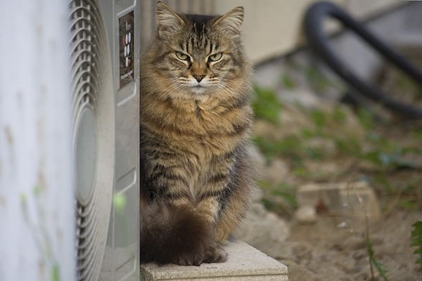 猫です。 愛犬の散歩がてらに見掛けた猫たち。 この子は飼い猫です。 ペ...  春休みのデッサン