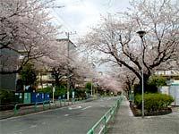 Koji0607_03