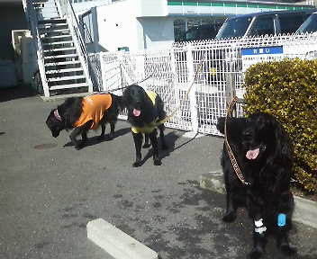 三重県の動物病院へ