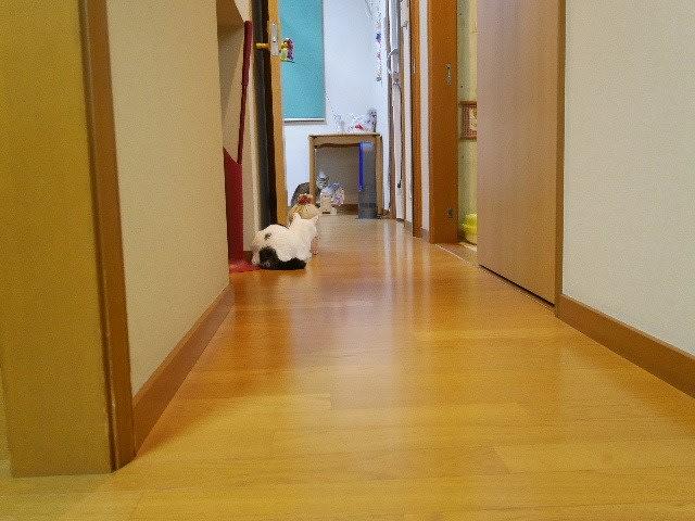 猫!ビックリ!【動画】