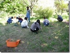 ②草地の外来種除去