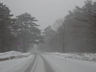 天皇道路の下あたり。凍結はしていません。
