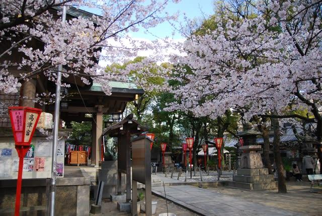 高津宮の桜 - フォト ダイアリー