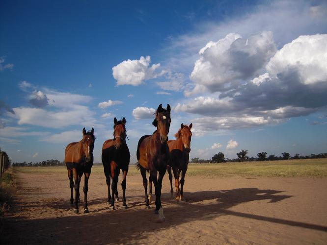 牧場のかわいい仔馬たち