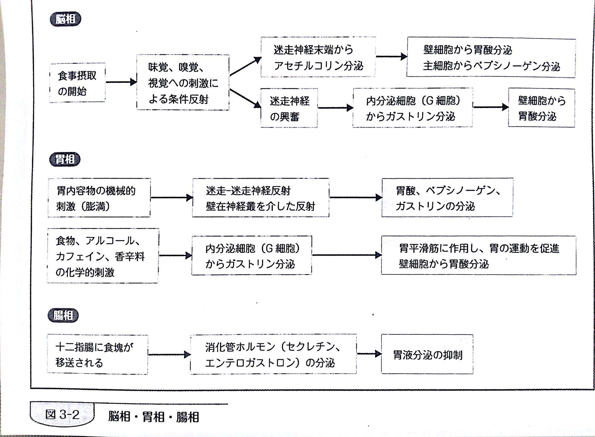 基礎栄養学 131010 配布資料 (1...