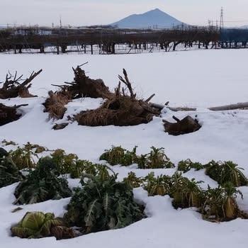 2018年1月28日の関東平野(茨城県筑西市)