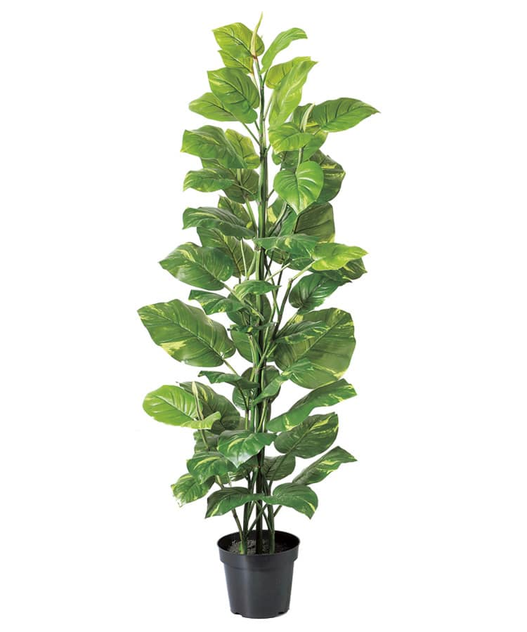 ポトス フェイクグリーン 人工観葉植物の画像