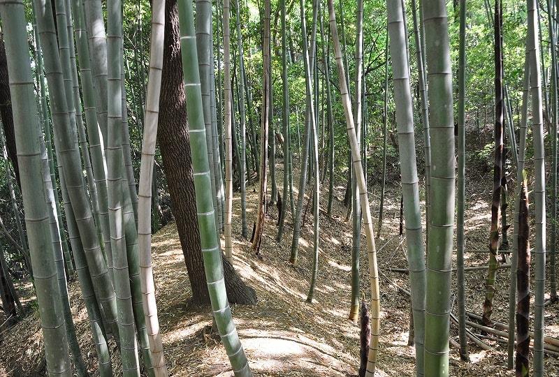 竹薮内の堀と土塁