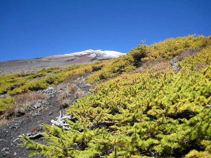 自転車の 自転車 富士山山頂 : ... したカラマツ越しの富士山頂