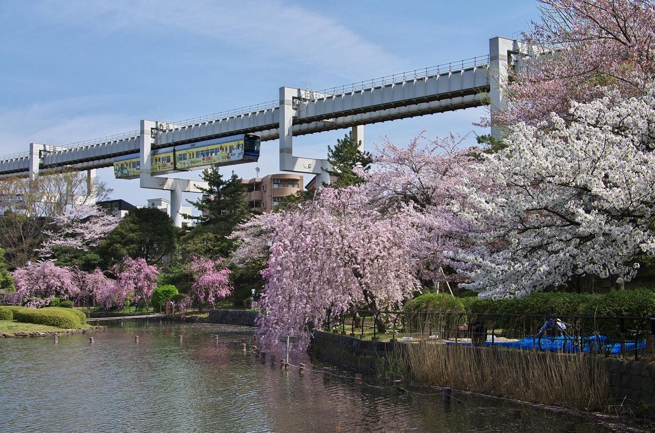 のは千葉公園。ここで千葉都市モノレールとしだれ桜を絡めて撮ろうとしたのですが…ラッピングのない通