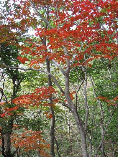 花があったり そのうちに 前回の時と風景が一緒 前回はこのへんから今日...  ふーちゃんの京都