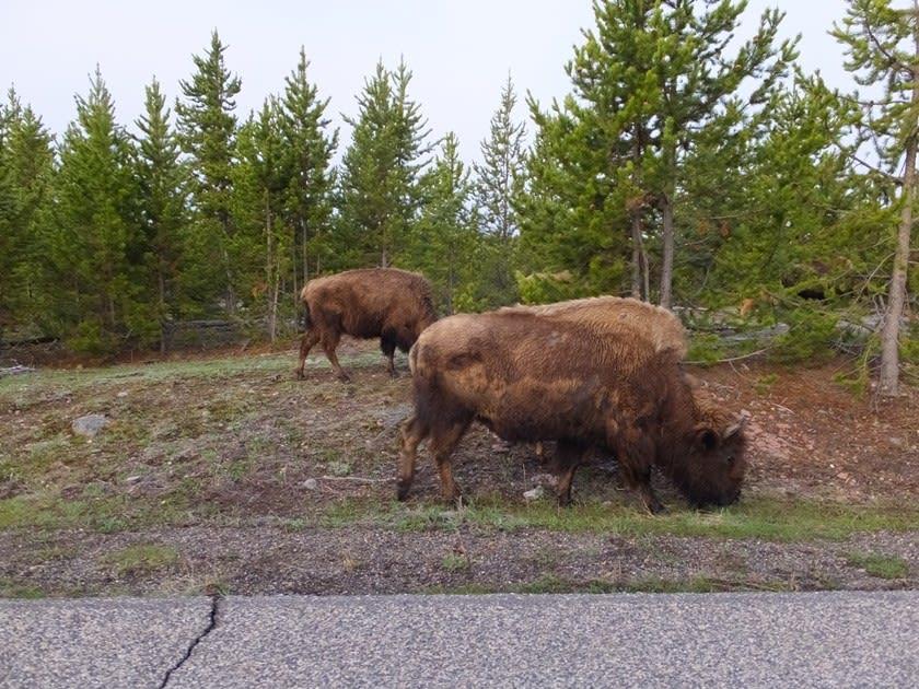 イエローストーン国立公園の画像 p1_27
