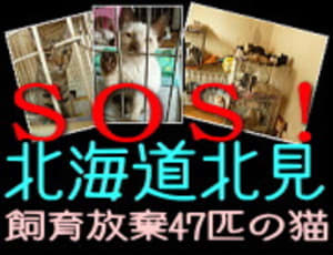 Banner_s_kitami47cats_6