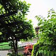 2011-6-4-35 ツル性植物