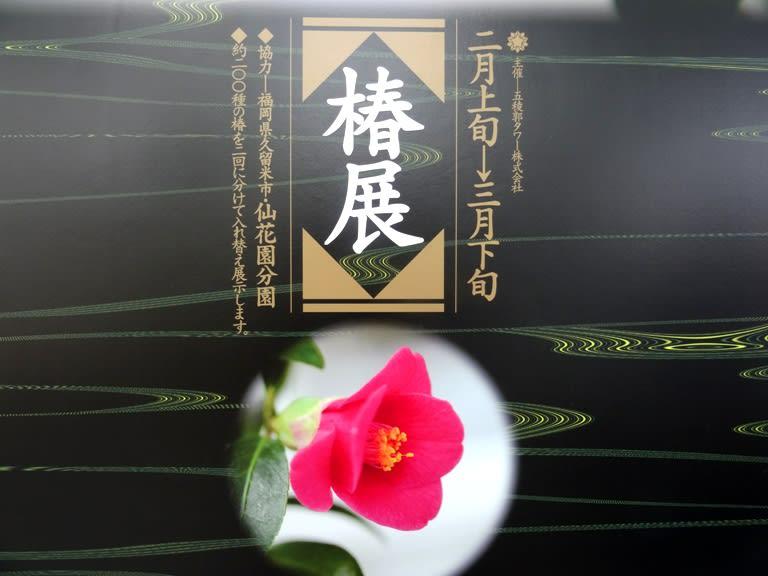椿展2015五稜郭タワー ...