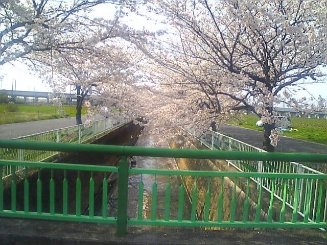 桜色の町並み