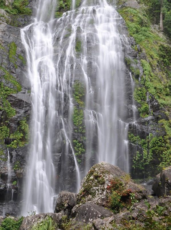 千尋の滝ツツジ