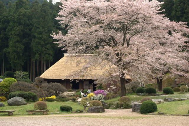 東秩父村「花桃の里」と「和紙の里」 - 遅咲きのじい散歩