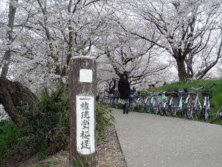 権現堂堤(権現堂公園)