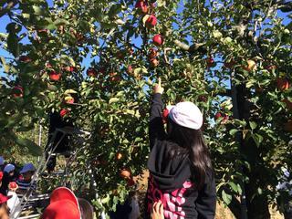 室野井果樹園でりんごの収穫体験